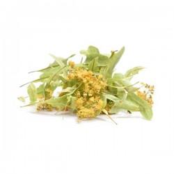 PHYTOFRANCE PLANTES - TILLEUL CARPENTRAS